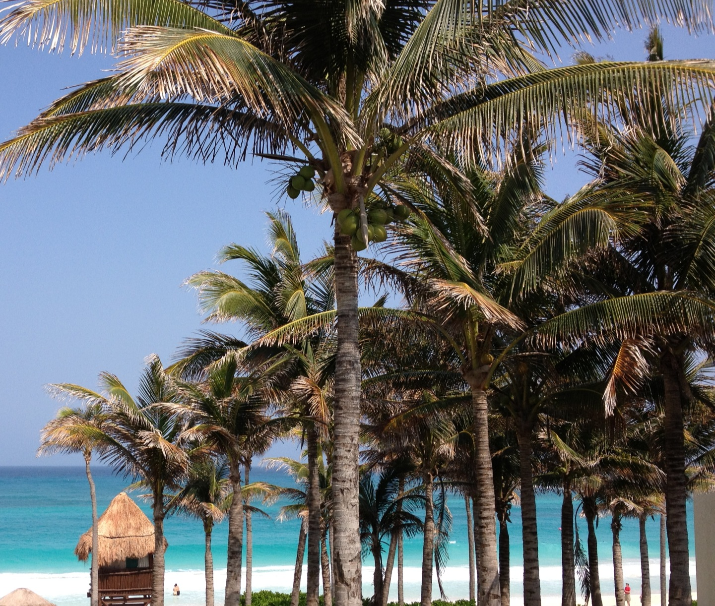 A Food Lover S Spring Break In Cancun Spicebox Travels