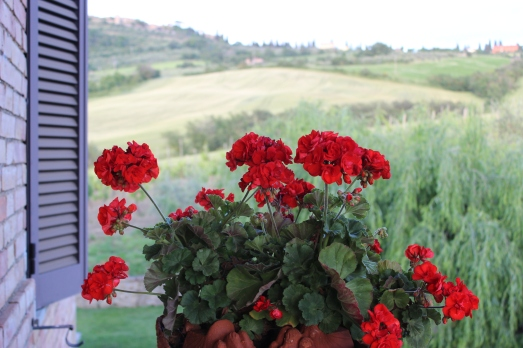 agriturismo flowers