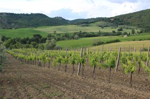 agriturismo vineyard
