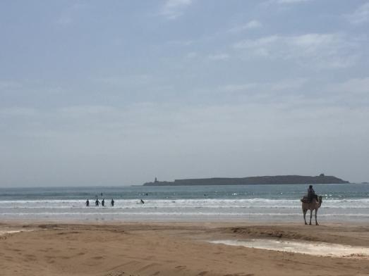 essaouira camel surf beach.jpg