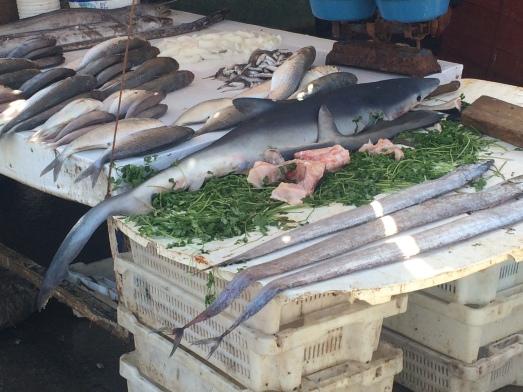 essaouira shark.jpg