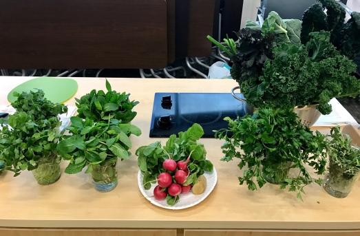 herbs radish.jpg